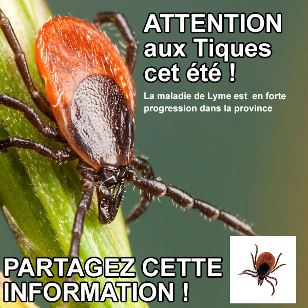 ATTENTION AUX TIQUES CET ETE