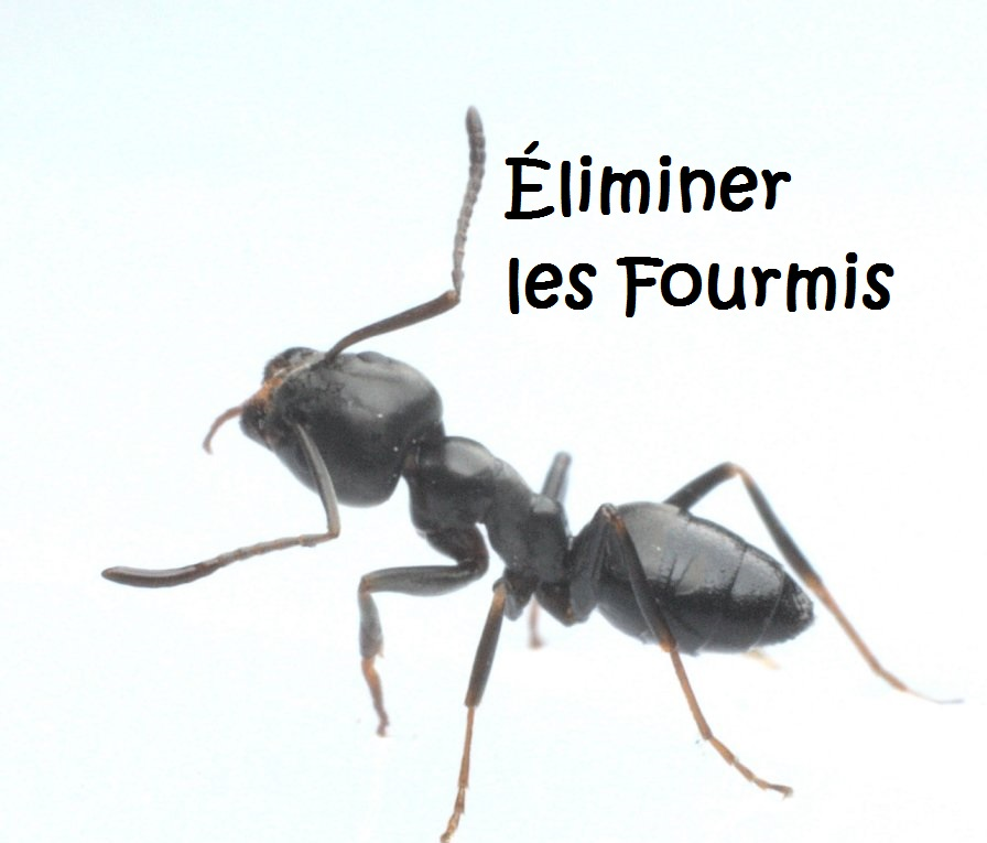 comment liminer les fourmis circulaire en ligne. Black Bedroom Furniture Sets. Home Design Ideas